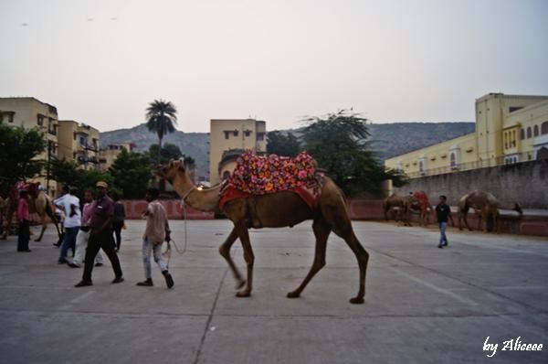 camile-India
