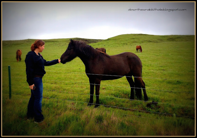 Iceland horse Ring Road, things to do in Iceland