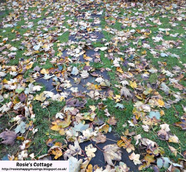 Leaf filled garden