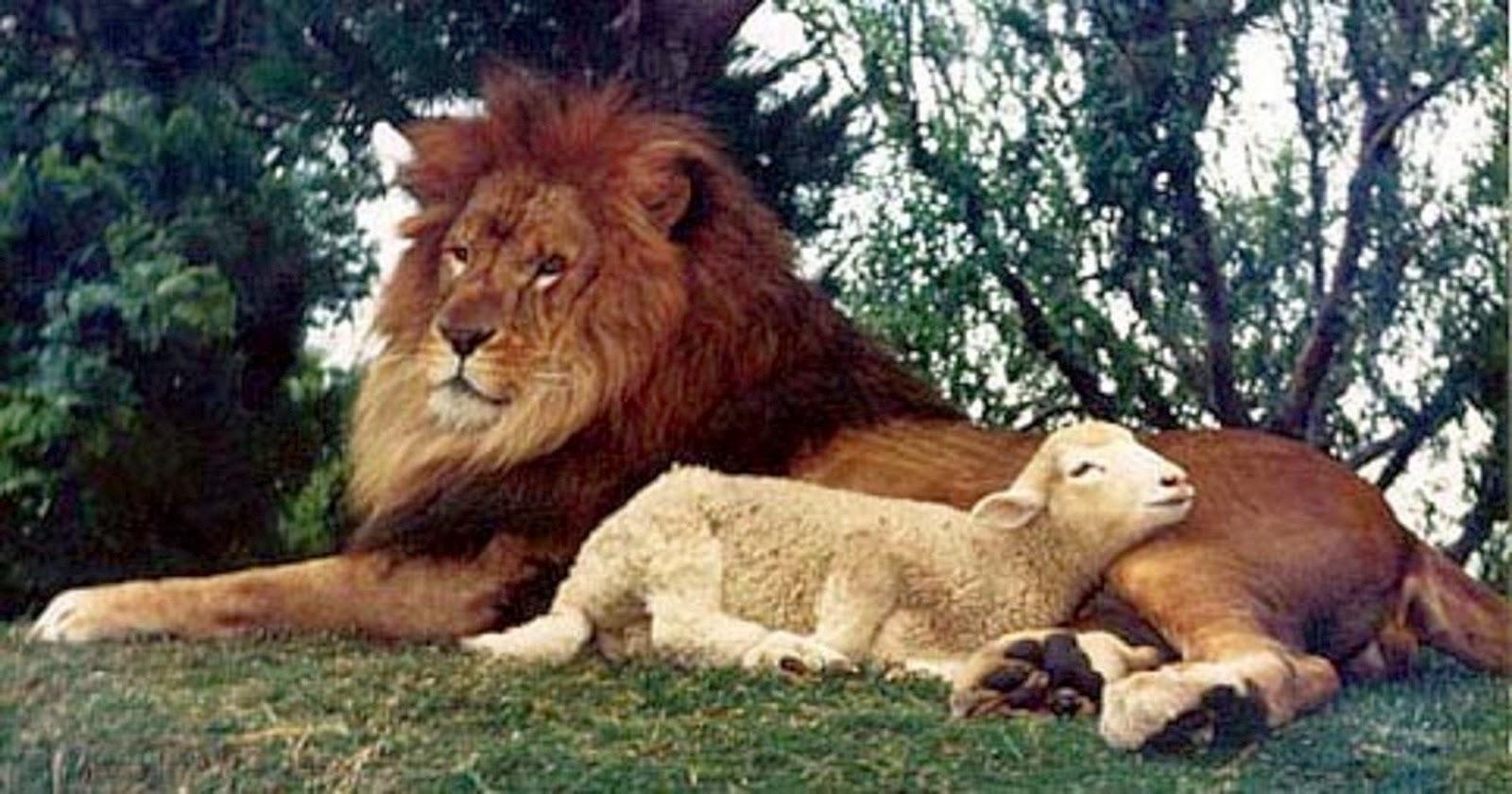 Lion nd the lamb