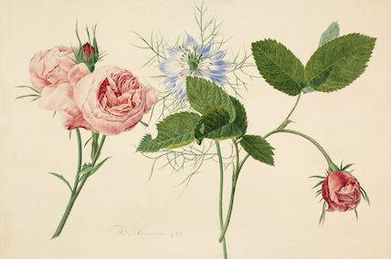 botanical RHS print