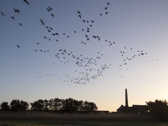 Birds in flight at dusk over the Wexford Wildfowl Reserve