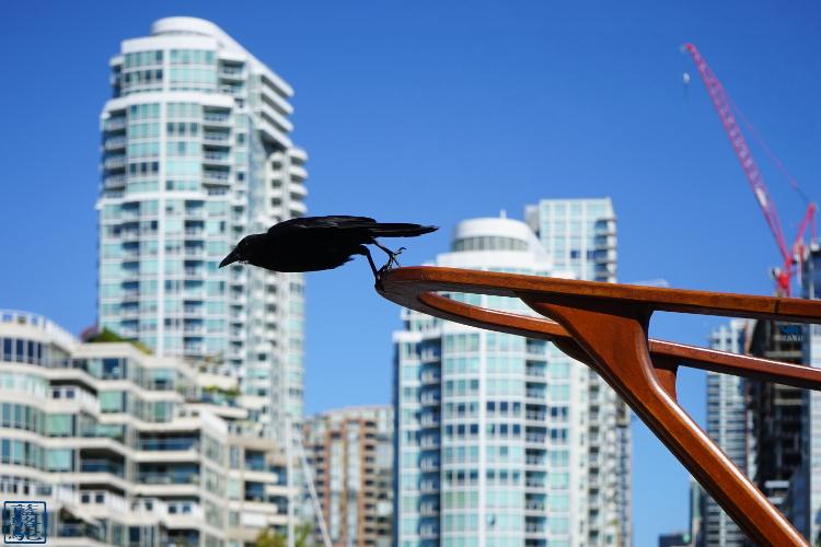 Le Chameau Bleu - Blog Voyage Canada Colombie Britannique -Le Corbeau de Granville Island