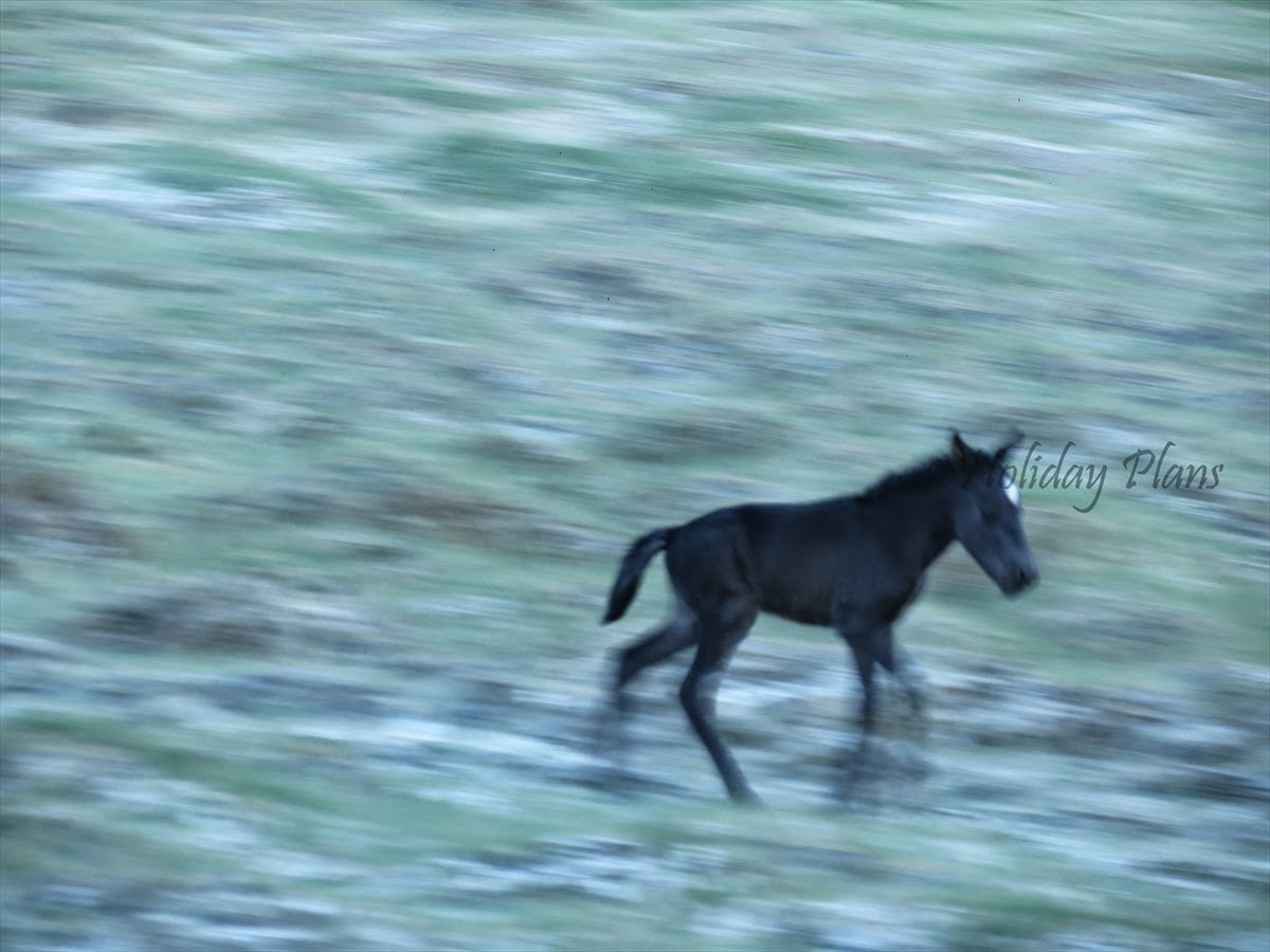 A foal enjoying in wilderness