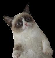 Gato assustado png