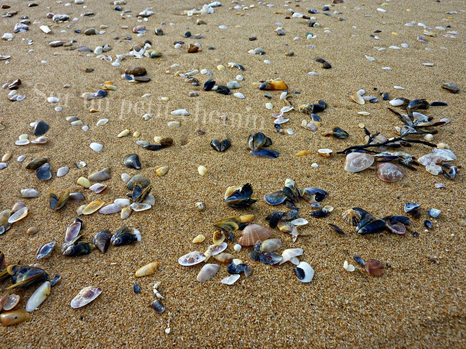 Coquillages sur la Grande Plage de Saint Gilles Croix-de-Vie en Vendée