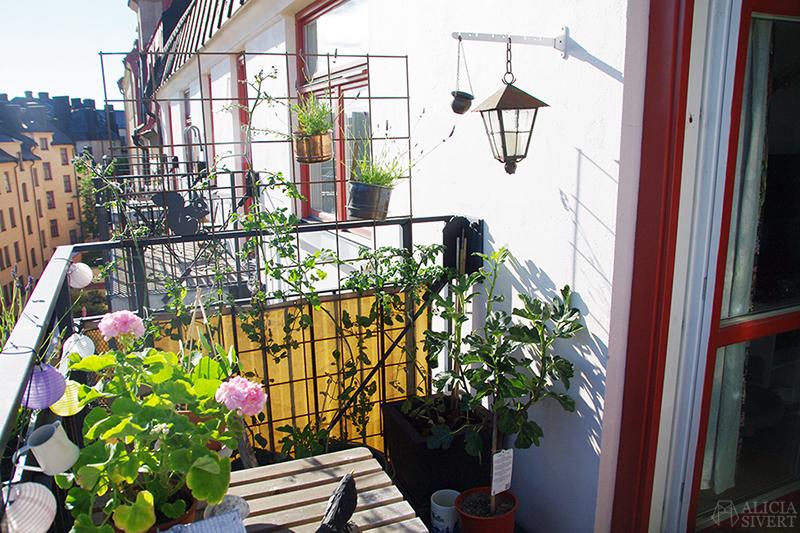 aliciasivert alicia sivert sivertsson odla på balkong balkongodling odling trädgård inspiration inreda inredning kruka krukor det norske hageselskap hage på balkongen tomat tomater