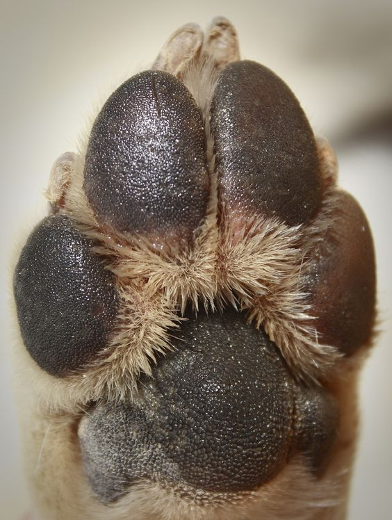 Dog Grooming Tips – Make Sure Your Paws Are Perfect Before You Brush Them