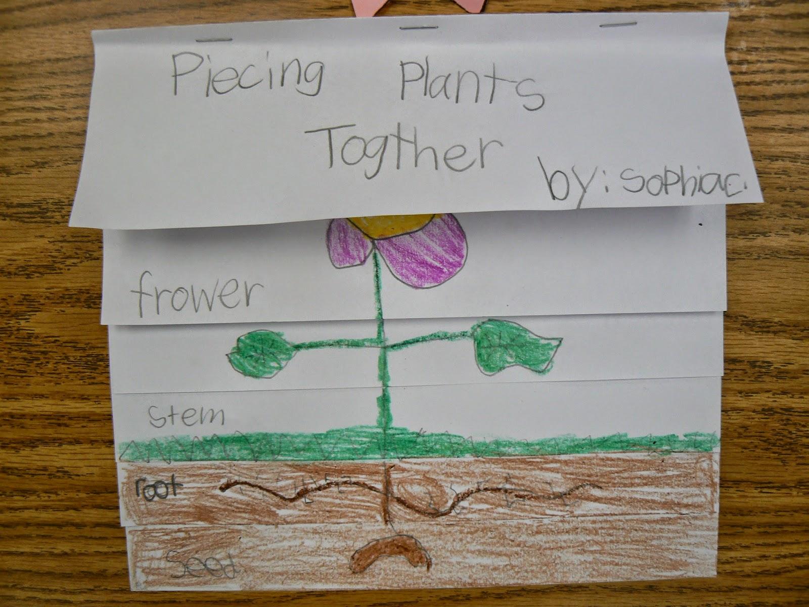 Mrs T S First Grade Class Plant Parts Flip Book