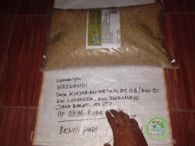 Benih Padi TRISAKTI Pesanan WASKENDI Indramayu, Jabar.  (Sebelum di Packing)