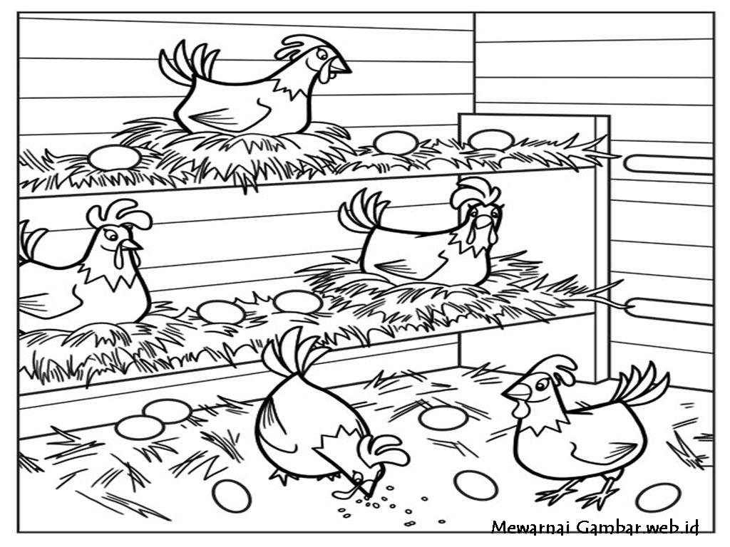 Cara Ternak Sapi Keren Ternak Ayam Rumahan