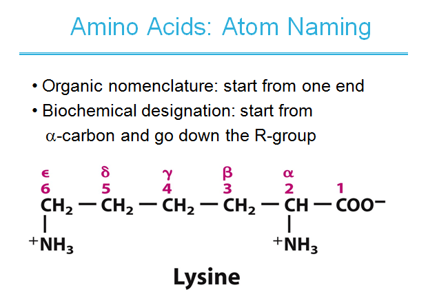 Amino acids ,peptides ,proteins