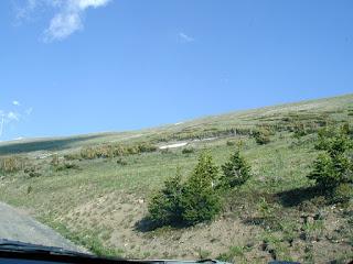 Tiny (dwarf) trees near tree-line in Rocky Mountain National Park