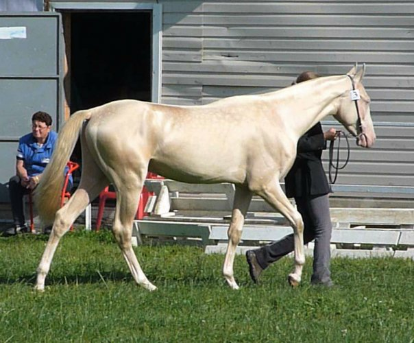 beautiful horse of the world
