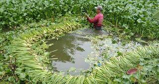 Eceng gondok memiliki banyak manfaat, karena tanaman air ini cocok untuk tempat pemijahan ikan atau tempat beranak ikan, terutama pada ikan ikan kecil, eceng gondok juga berfungsi sebagai peneduh kolam air adapula eceng gondok dibuat sebagai kerajinan tangan.
