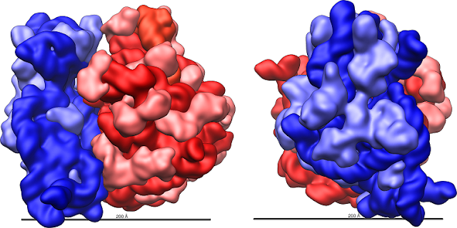 Forget the selfish gene -- the evolution of life is driven by the selfish ribosome