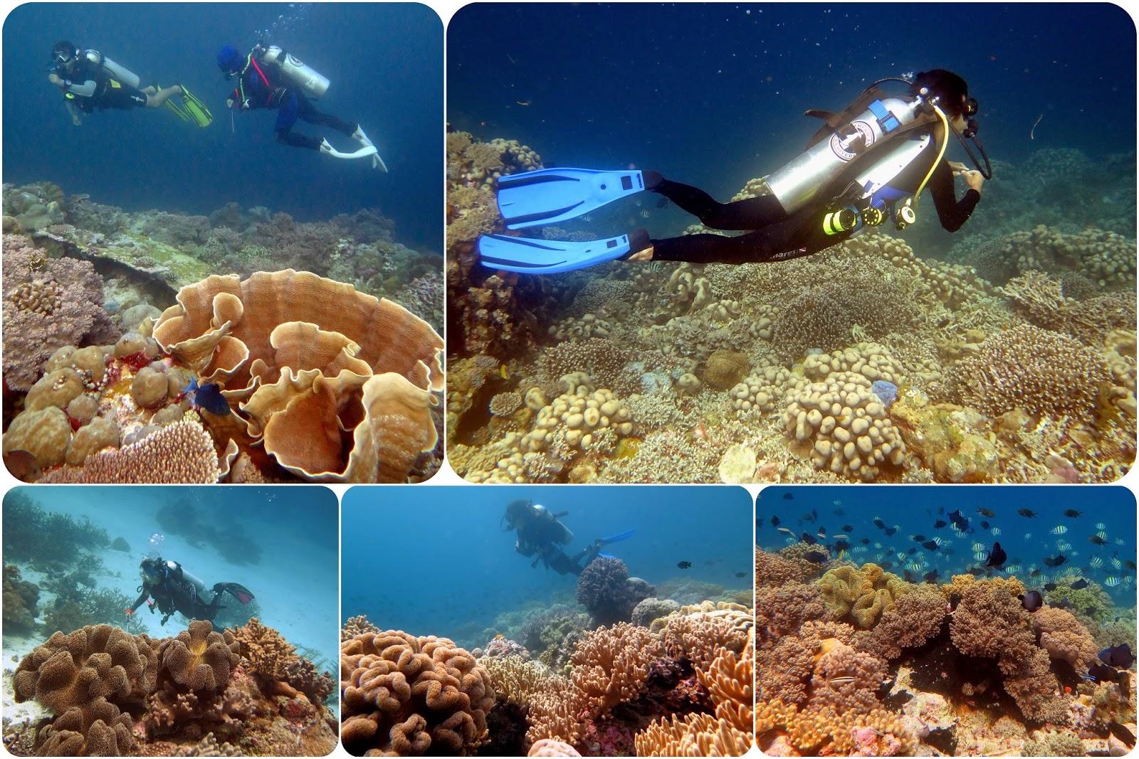 Keindahan Bawah Laut Pulau Tomia Wakatobi