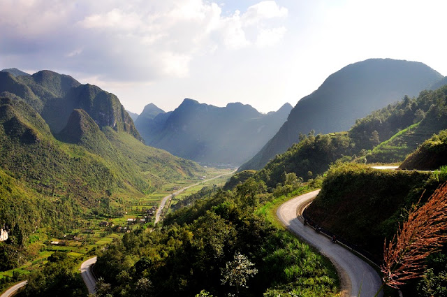The Flowers Are Blooming On The Ha Giang Rock Plateau 2