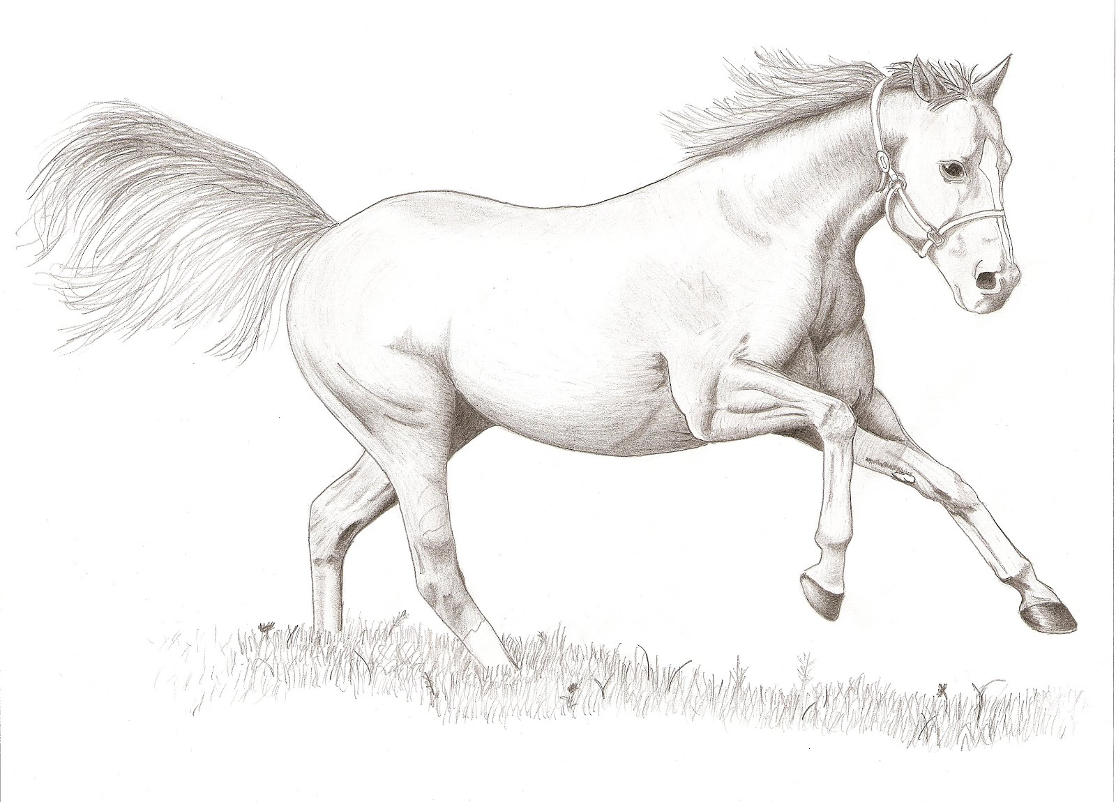 Horse Drawing Pictures ~ Drawing Pictures