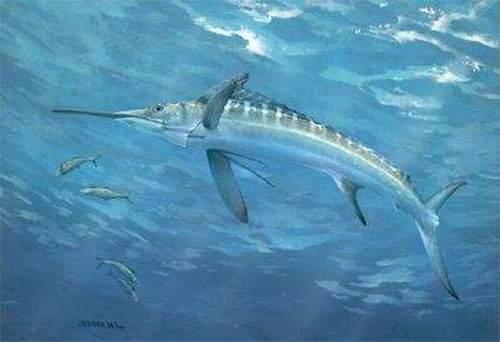 Gambar Ikan Pedang
