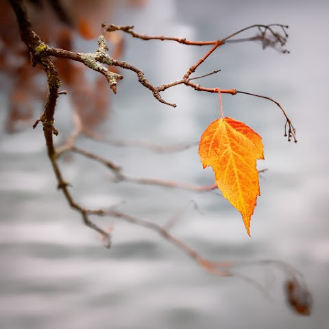 The Last leaf summary - A short story by O. Henry