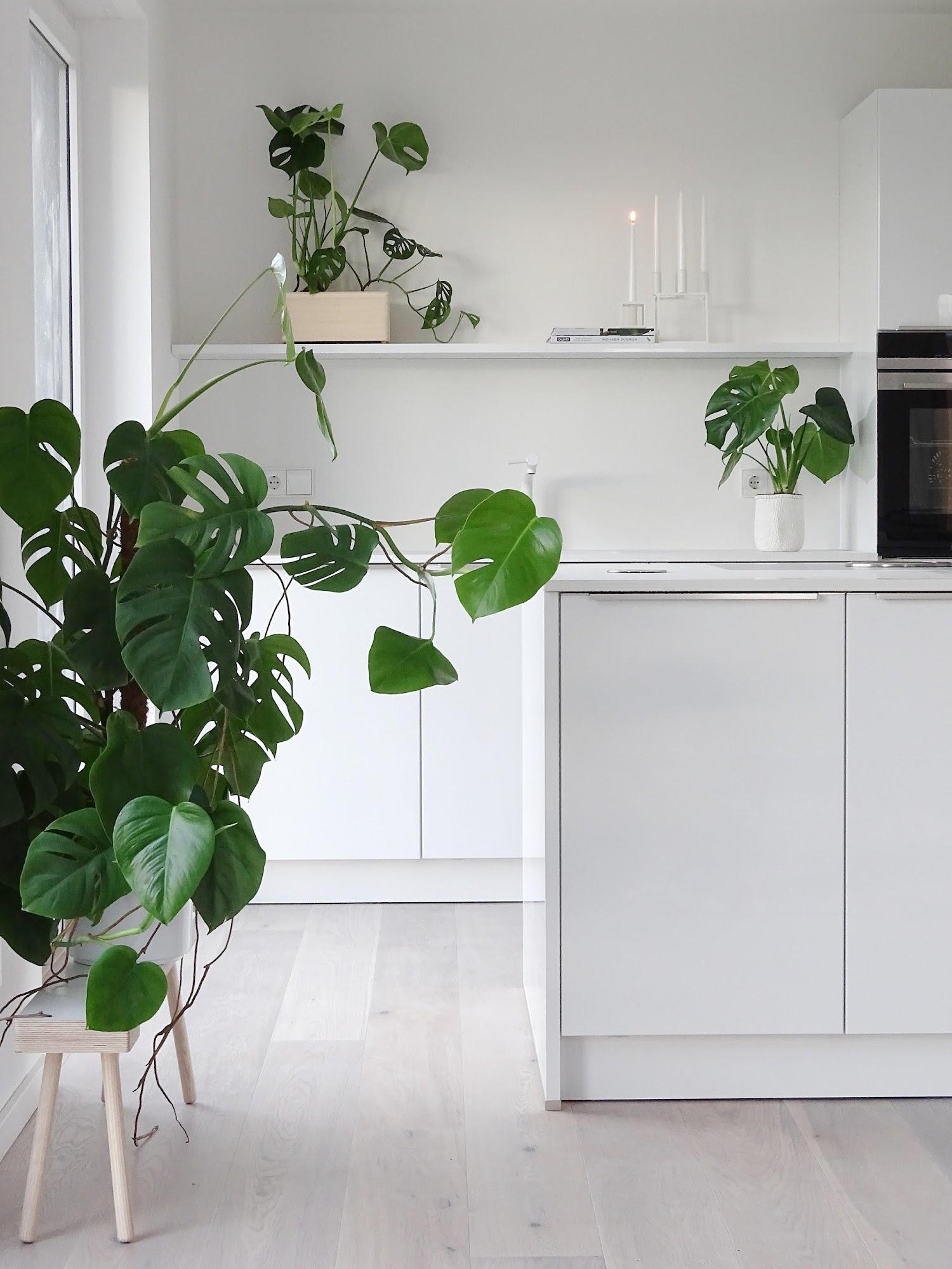 Indoor Garten Anlegen Geeignete Pflanzen: Zuhause