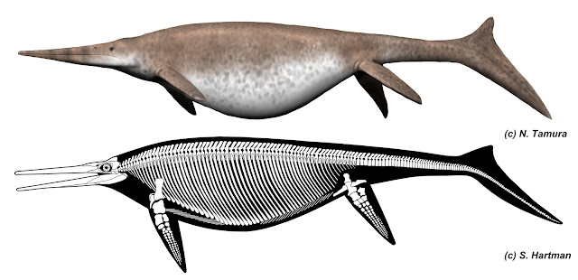 UK Giant ichthyosaur is one of the largest animals ever