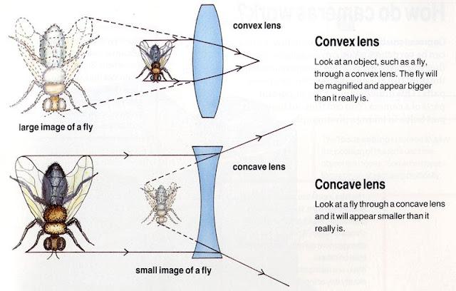 Karthi Blog Convex Lens Vs Concave Lens