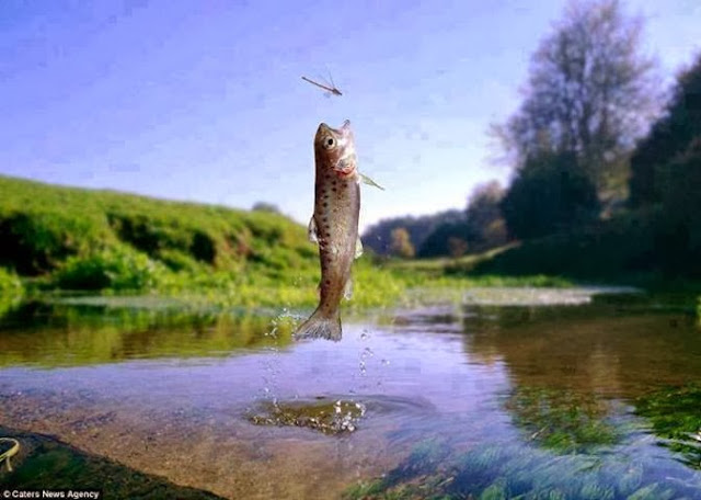 Amazing Pictures Of Animals - Fish and dragon fly
