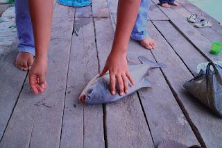 Umpan Mancing Ikan Bawal yang Ampuh dan Jitu