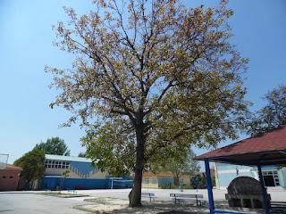 Δήμος Κατερίνης: Αειφορική διαχείριση αιωνόβιων δένδρων