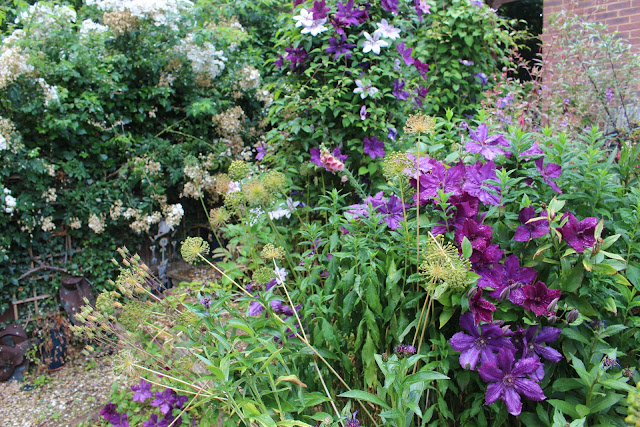 Clematis obelisks and Elsa Spath taking a wander around the garden