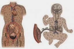 penyakit sipilis pada janin dan ibu hamil