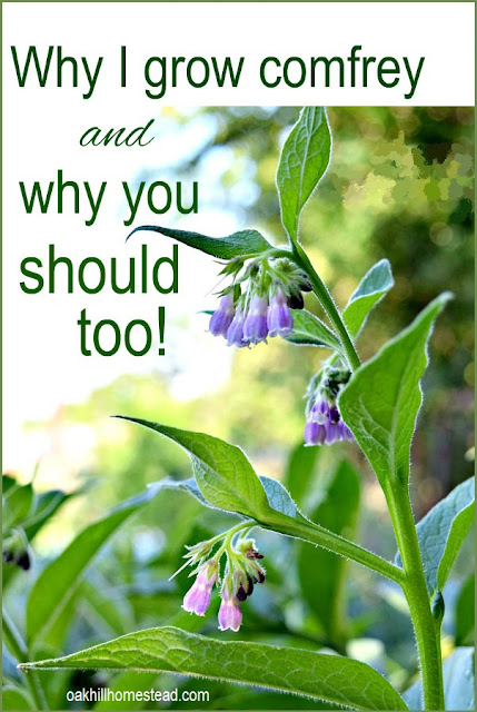 Here's why I grow comfrey, and the reasons why you should grow it too.