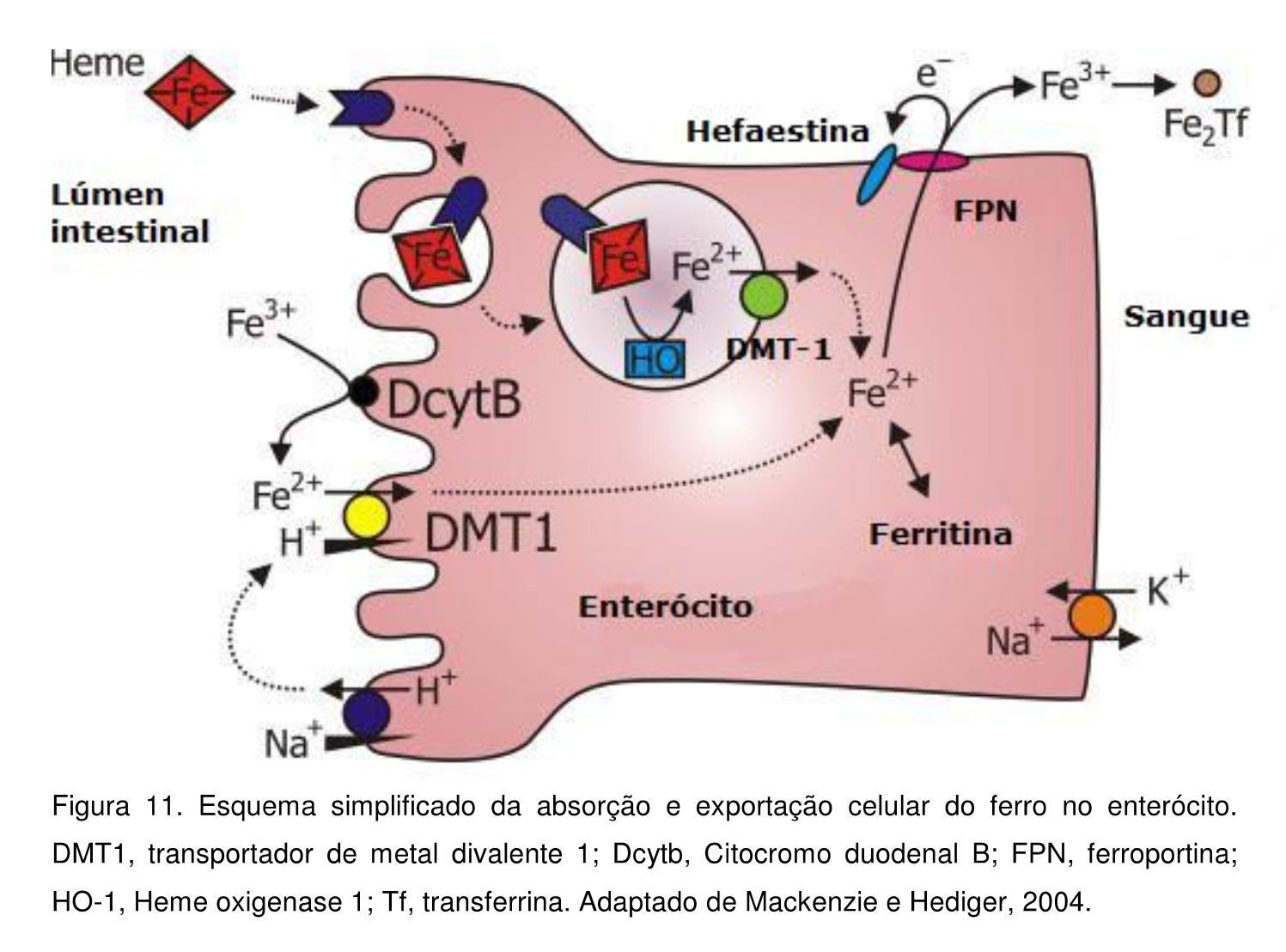 O que faz bioquimica