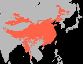 Línguas Sino-tibetanas