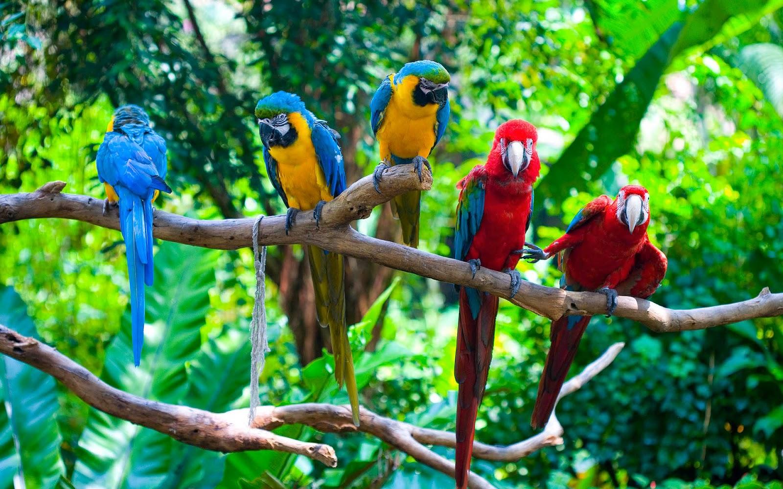 Wallpaper met papegaaien op tak