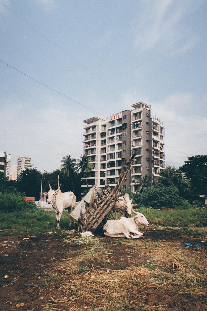 MUMBAI PAUSED | Mumbai, Paused, Photography
