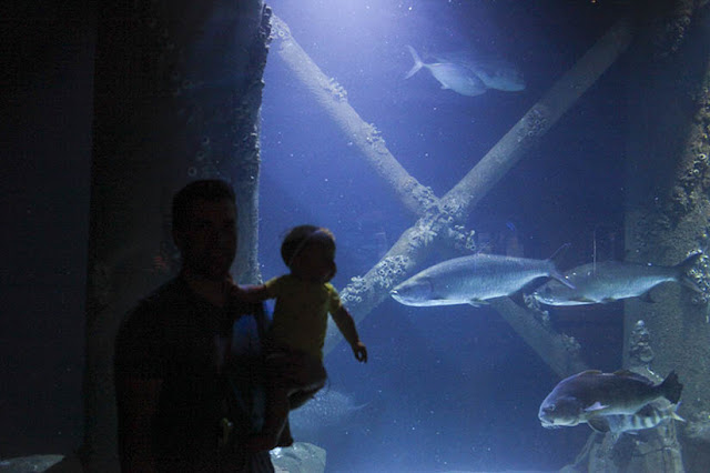 Dad and infant enjoy the Downtown Aquarium Houston