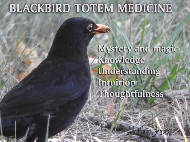 Blackbird Totem Meaning