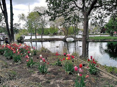 Tulip Festival at the park