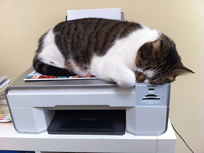 Cat sleeping on top of printer