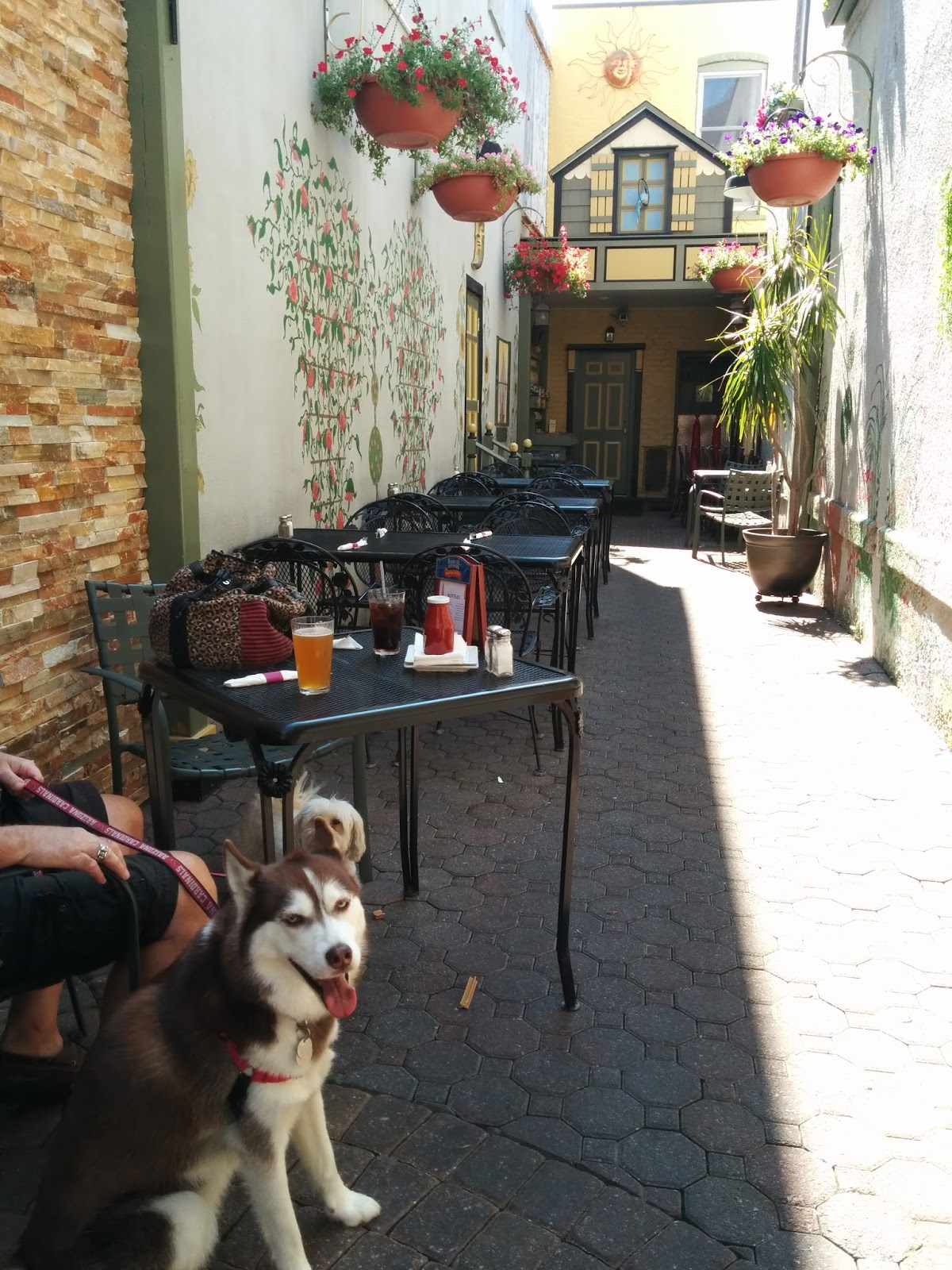 Outdoor Patio Dog Beds: Dogs Luv Us And We Luv Them: Lunch At A Dog Friendly Cafe