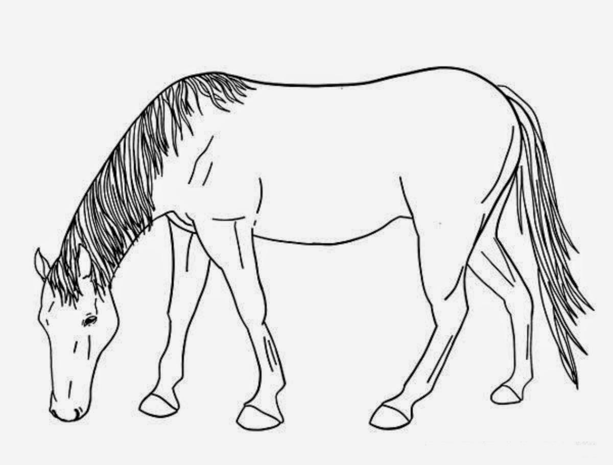 Dibujos De Caballos Bebes Para Colorear: Colour Drawing Free HD Wallpapers: Horse For Kids Coloring