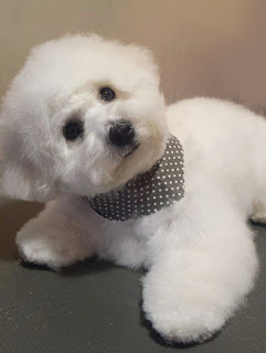 puppy grooming tamworth polesworth grooming salon ashby de la zouch