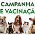 Vigilância anuncia Campanha de Vacinação de cães e gatos