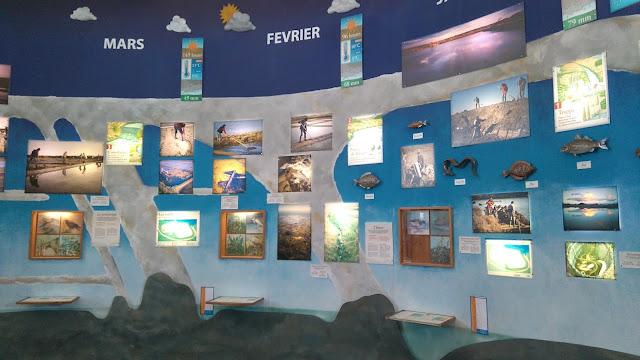 guerande, loire atlantique, tourisme, musee, terre de sel, marais salants, bullelodie