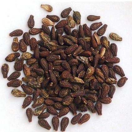 गर्भ धारण के लिए शिवलिंगी के बीज लें-Seeds of Shivlingi for conceiving