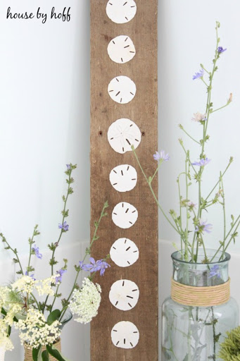 Sand Dollars Mounted on Wood