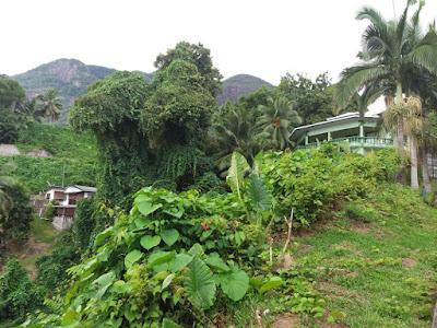 naturaleza seychelles
